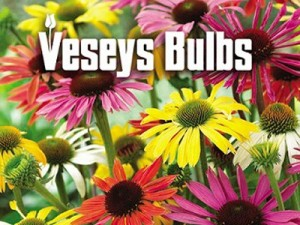 Veseys Bulbs picture with flowers