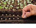 photo of a hand planting seeds